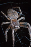 Spider in web Stock Images