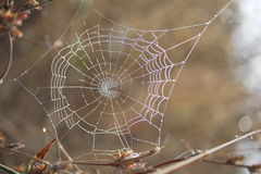 Spider Web. Morning Dew on a spider web Royalty Free Stock Photos
