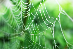 Free Spider Web Stock Photo - 25820430