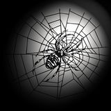 Spider in the web. A big spider sitting in the middle of its web. This file is also available as EPS-File Royalty Free Stock Image