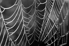 Spider Web Royalty Free Stock Photos