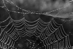 Spider Web. Dew covered spider web in the summrer morning Stock Images