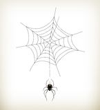 Spider and web vector illustration