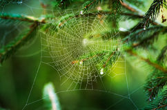 Spider web. And nature bokeh stock photography