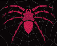 Spider on the web. Black and red royalty free illustration