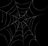Spider Web Stock Photos
