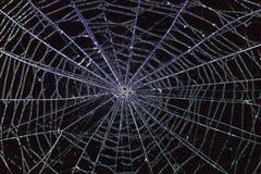 Free Spider Web Royalty Free Stock Photos - 35394798