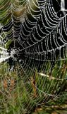 Spider-Web. After Rain royalty free stock photo