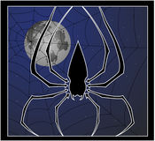 Spider and web Royalty Free Stock Images