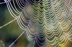 Free Spider Web Royalty Free Stock Photos - 44924778