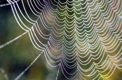 Free Spider Web Royalty Free Stock Photos - 44924778