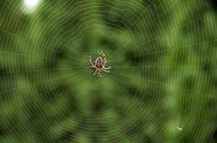 Free Spider Web Royalty Free Stock Photos - 45032788