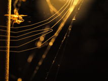 Spider Web. A spider in a web at night stock photo