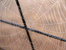 Spider Web. With dew, small DOF Royalty Free Stock Photos