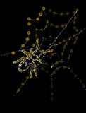 Spider and web. A spider and web on a black background Stock Image