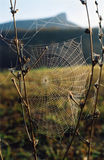 Spider-web. Spiderweb on the grass Royalty Free Stock Photos