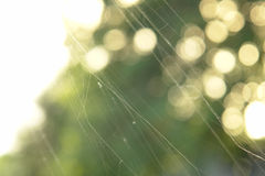 Spider Web. Photo of a spider web over an abstract background Royalty Free Stock Photos