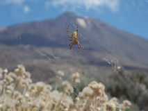 The spider Royalty Free Stock Images