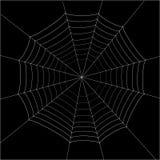 Spider web. On black background Stock Images