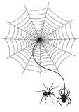 Spider web. Illustration in white background Royalty Free Stock Photo