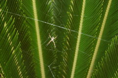 Spider on web Stock Photo