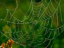 Spider-Web. A blured background spider web Stock Image