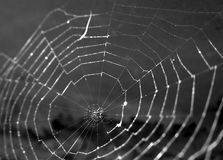 Spider Web. Black and white, focused on center Stock Image