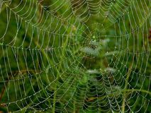 Spider Web. Morning Dew on a spider web Royalty Free Stock Image