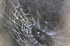 Spider Web Abstract Stock Photo