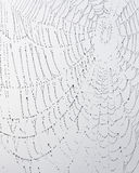 Spider web against grey sky Stock Photography