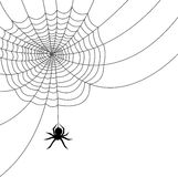 Spider Web/AI file. Illustration of a spider web and spider Stock Photos