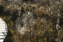 Spider web along the Kepler track Royalty Free Stock Photography