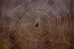 Spider Web, Arachnid, Spider, Invertebrate Stock Photos