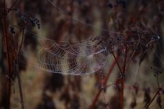 Spider Web, Arachnid, Wildlife, Spider Royalty Free Stock Image