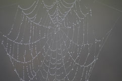 Free Spider Web Architecture Stock Photography - 93592092