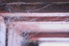 Spider`s web on the window. Spider web is attached in the corner of the old window Royalty Free Stock Photos