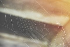 Spider web in the attic in the sun rays stock photo