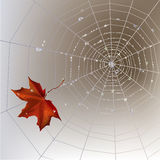 Spider web autumn background Stock Photography