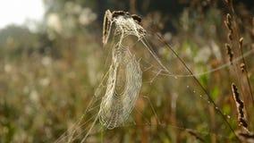Spider web on autumn grass stock footage