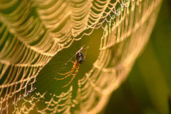 Spider Web In Autumn Morning Stock Photo