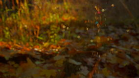 Spider Web In Autumn Wood stock video