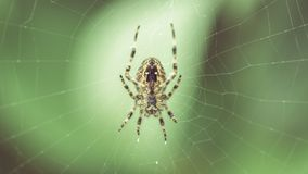 Spider on the web B Stock Photography