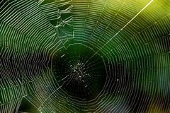 Spider web in back light Royalty Free Stock Photo