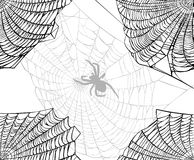 Spider and web background Stock Photography