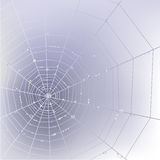 Spider web background. Stylish background with spider web with transparent shining water drops Stock Image