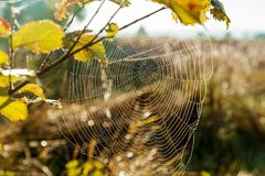 Spider web in the background of the sun. Royalty Free Stock Photo