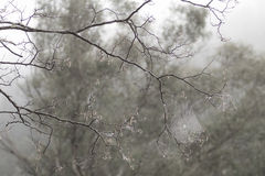 Spider web in bare tree branches with morning mist Royalty Free Stock Photos