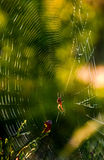 Spider in the web on beautiful foliage bokeh. Lovely background with spider in the web on beautiful foliage bokeh Royalty Free Stock Photo