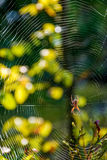 Spider in the web on beautiful forest bokeh. Lovely background with spider in the web on beautiful foliage bokeh Stock Photography