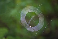 Spider web being weaved Royalty Free Stock Image